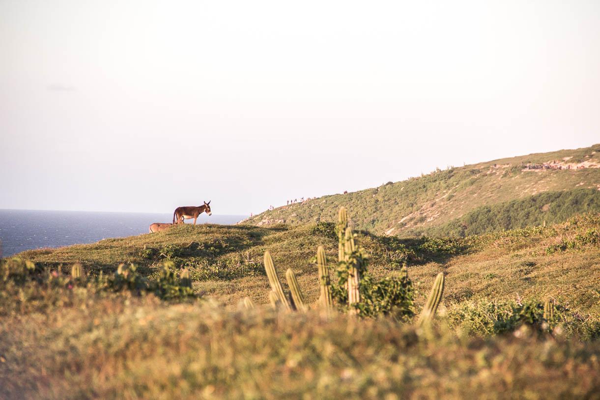 Un âne sur le chemin vers Pedra Furada à Jericoacoara - Route des Sensations