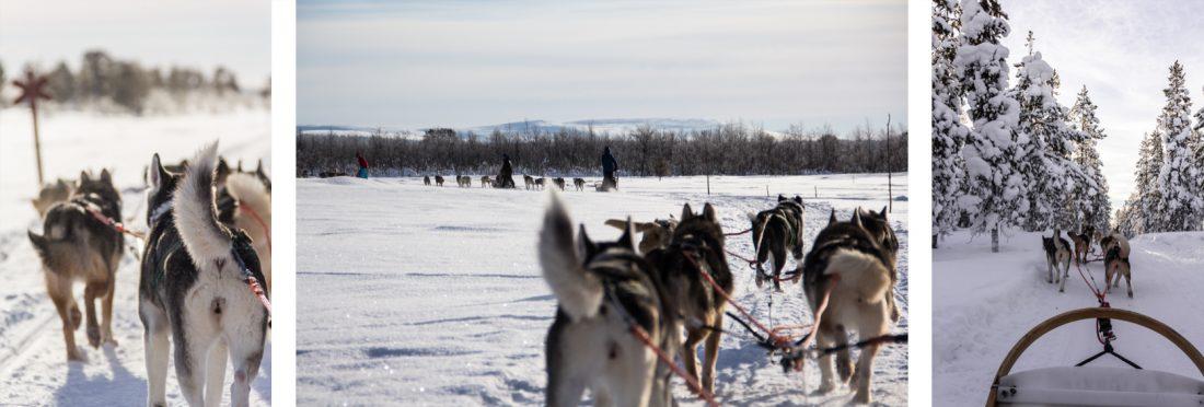 3 images d'une balade en chiens de traineau. Laponie finlandaise.
