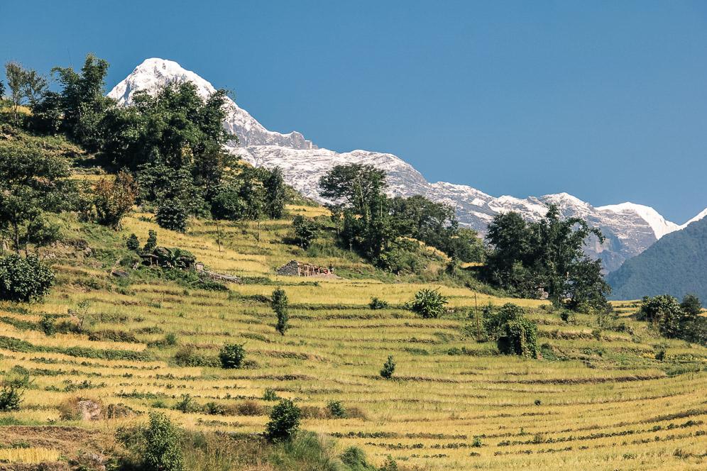 Plantation en étages. Népal