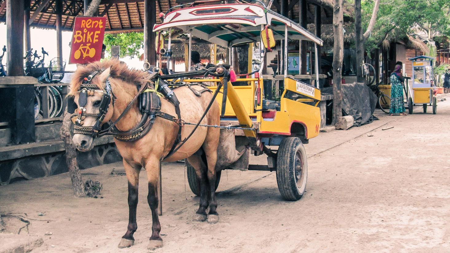 La charrette et le cheval sont les seuls véhicules à gili