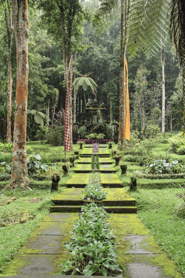 Allée dans le jardin Botanique de Bali