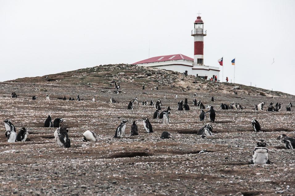 des pingouins sur l'île Magdalena et son phare en arrière plan