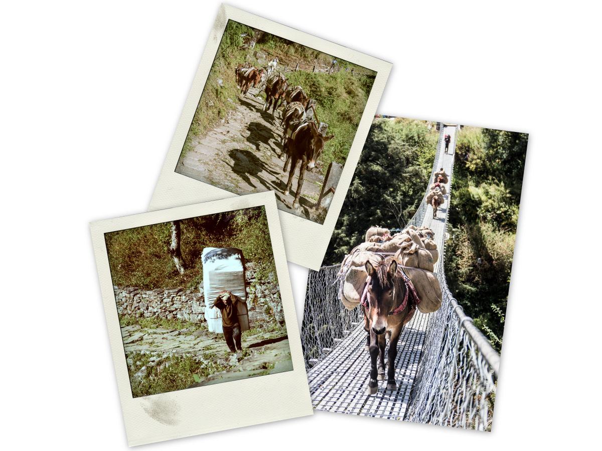 Les mules et les porteurs transportent les marchandises dans les montagnes du Népal.