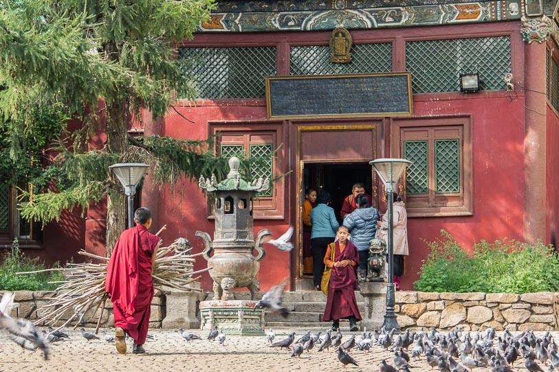 Moine aux tâches quotidiennes au Monastère de Gandantegchinlin à Oulan-Bator, Mongolie