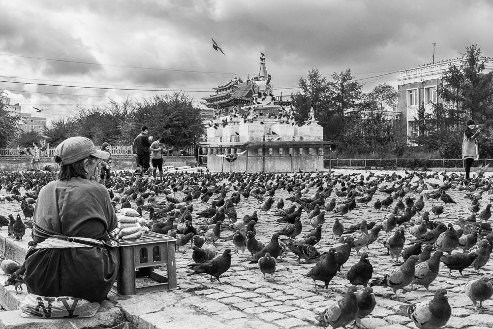 Pigeons au Monastère de Gandantegchinlin à Oulan-Bator, Mongolie