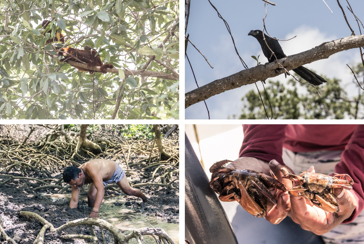 La faune du Delta do Parnaib. Sur la Route des Sensations.