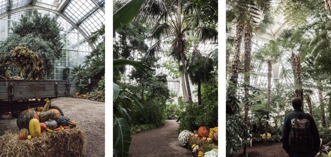 Serre aux palmiers du Palais de Schonbrunn à Vienne.