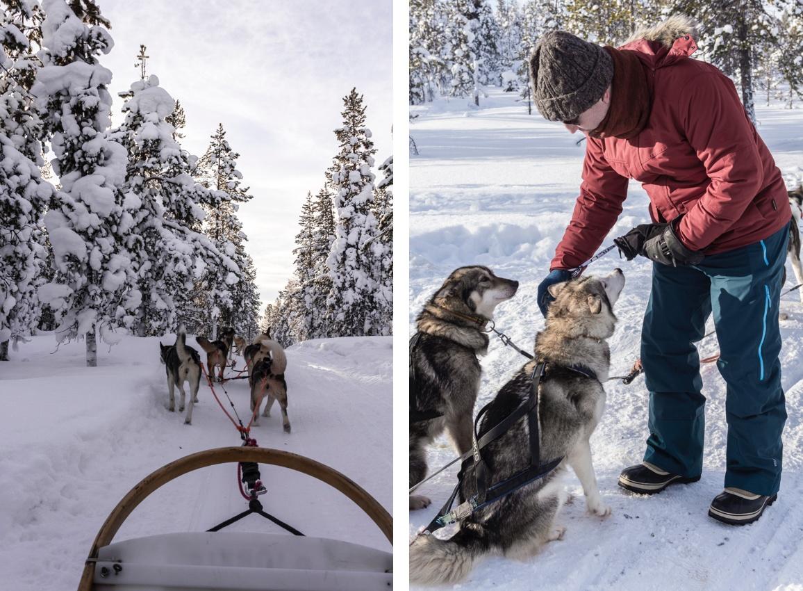 Traineau à chien - que faire en Laponie.