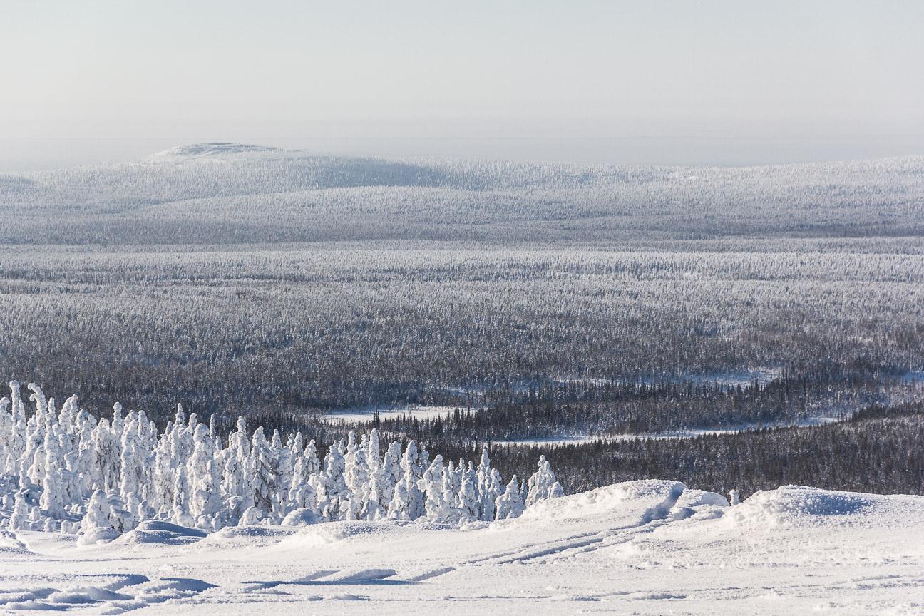 Vue du sommet d'un colline en Laponie finlandaise.
