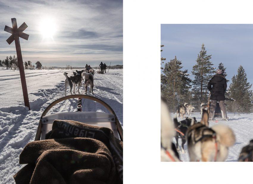 Balade en traineau à chiens en Laponie.