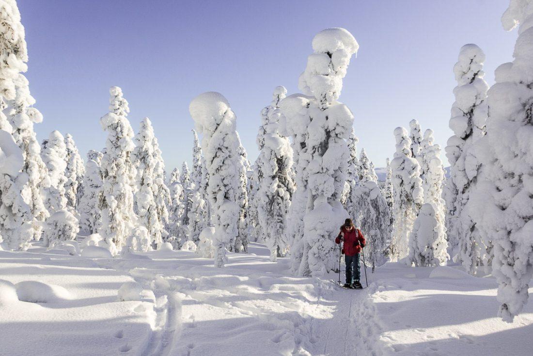 Randonnée raquette en Laponie.